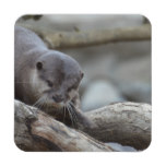Adorable Otter Drink Coaster