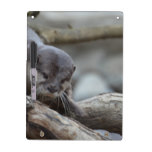 Adorable Otter Dry Erase Board