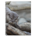 Adorable Otter Notebook