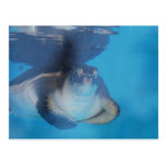 Baby Sea Turtle Postcard