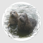 Baby Seals Sticker