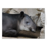 Baird's Tapir Greeting Card