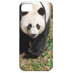 Black and White Panda iPhone SE/5/5s Case