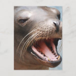 California Sea Lion Postcard