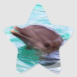 Dolphin Design Stickers
