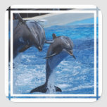 Dolphin Jumping Stickers