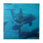 Dolphin Play Tile