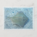 Fresh Water Stingray Postcard