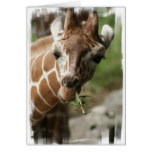 Giraffe Snack Greeting Card