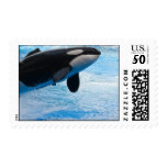 Killer Whale Postage
