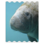 Large Manatee Underwater Plaque