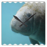 Large Manatee Underwater Square Wall Clock
