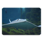Large Stingray Card