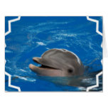 Lovable Dolphin Card