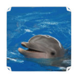 Lovable Dolphin Coaster