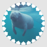 Manatee Stickers