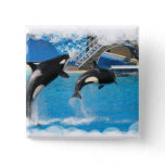 Orca Whales Square Button