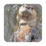 Otter Back Float Beverage Coaster