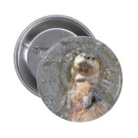 Otter Back Float Button