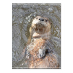 Otter Back Float Postcard