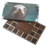 Sea Lion with Whiskers 45 Piece Box Of Chocolates