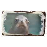 Sea Lion with Whiskers Brownie