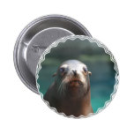 Sea Lion with Whiskers Button