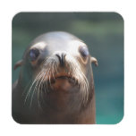 Sea Lion with Whiskers Coaster