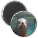 Sea Lion with Whiskers Magnet