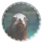 Sea Lion with Whiskers Plate