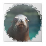 Sea Lion with Whiskers Tile