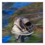 Sea Turtle Poking Head Up Poster