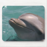Starring a Dolphin Mouse Pad