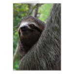Two Toed Sloth Greeting Card