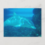 Underwater Dolphin Postcards