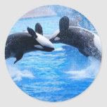 Whale Photo Sticker