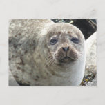 White Leopard Seal Postcard